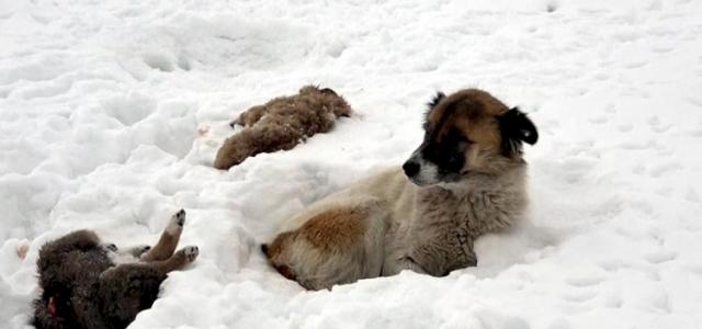 5 gündür donarak ölen yavrularının başında