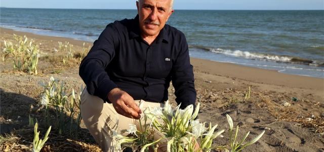 Kum Zambakları Akdeniz Belediyesi'nin Korumasında